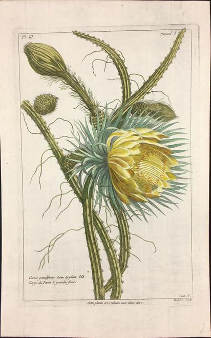 Cacti gandiflorus Pl.III Decad 8