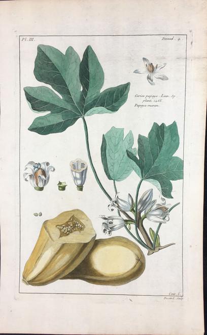 Corica papaya Pl.III Decad 4
