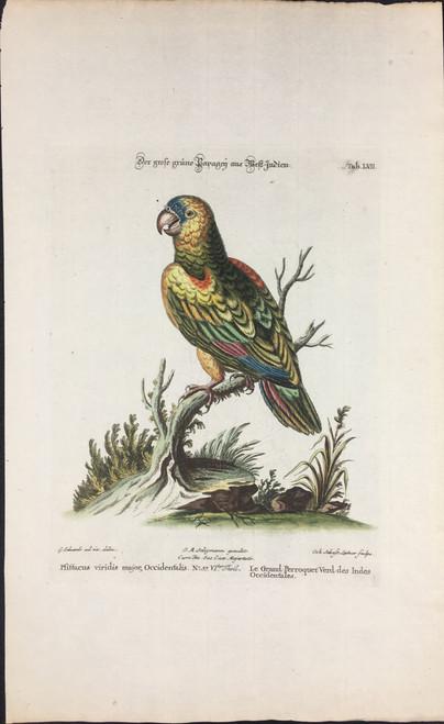 Le Grand Perroquet Verd des Indes Tab.LVII
