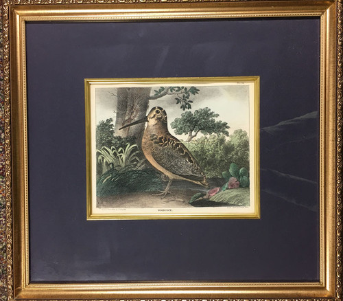 Woodcock from Cabinet of Natural History…Sports