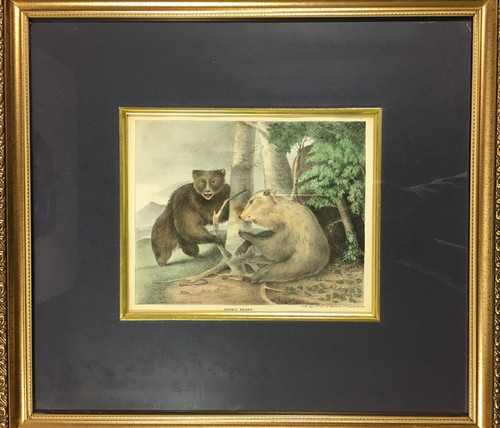Grisly Bears from Cabinet of Natural History…Sports