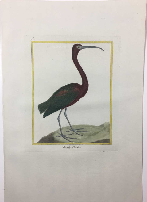 Italian Curlew - Plate 819