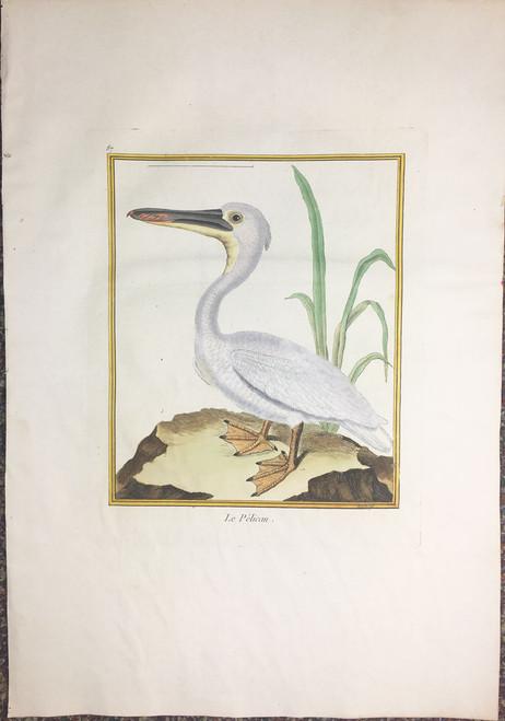 White Pelican - Plate 87