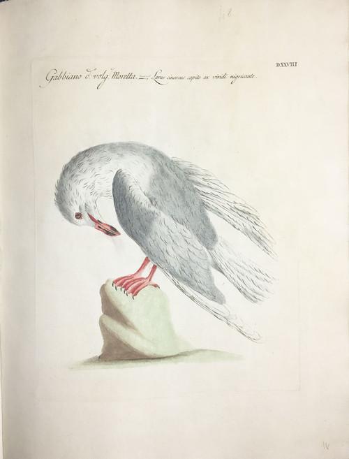 Seagull DXXVIII