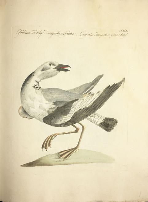 Seagull DXXIX