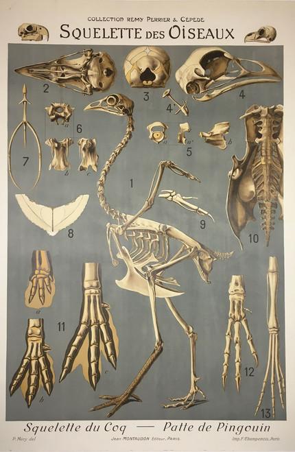 Squelette des Oiseaux /Sold as part of a set of 21 images*