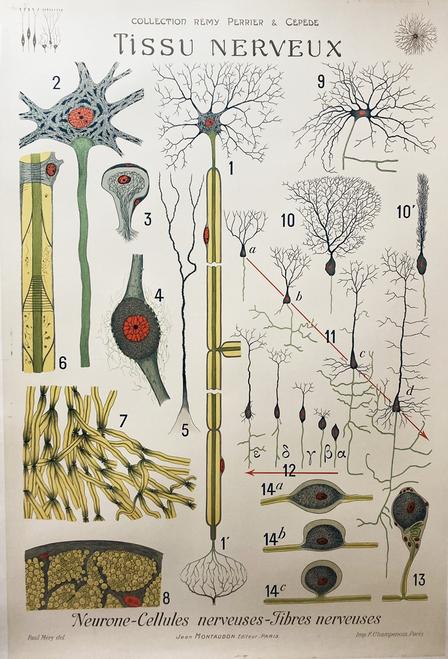 Tissu Nerveux Neurology original antique poster on linen rare set of 21