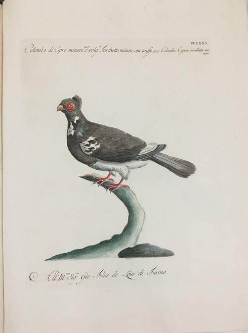 Cyprus Dove