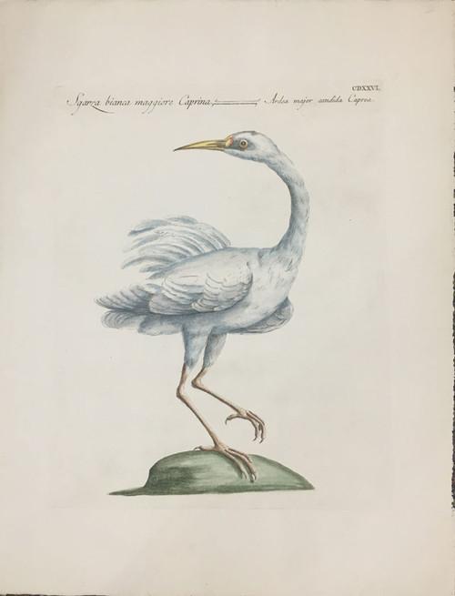 Caprina Heron