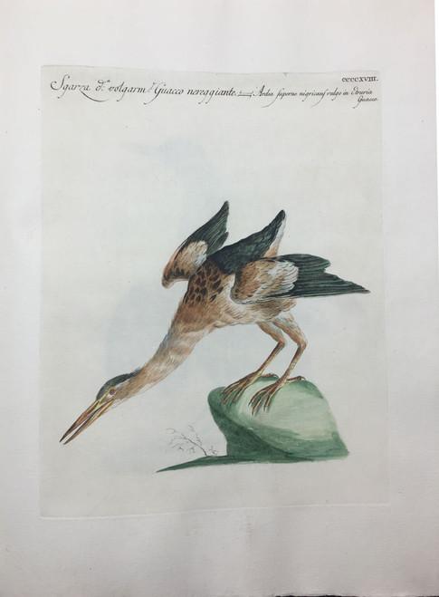 Etrurian Heron