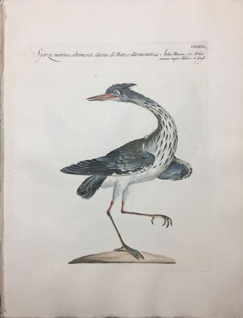 Marina Heron