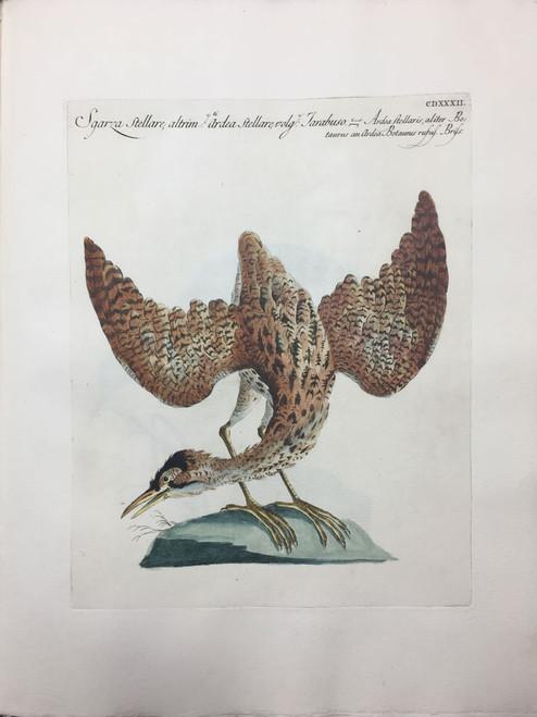 Starry Heron