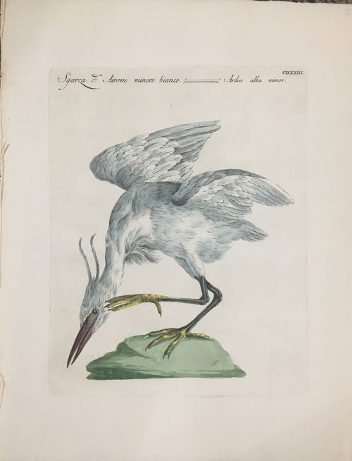 White Heron (Minor)
