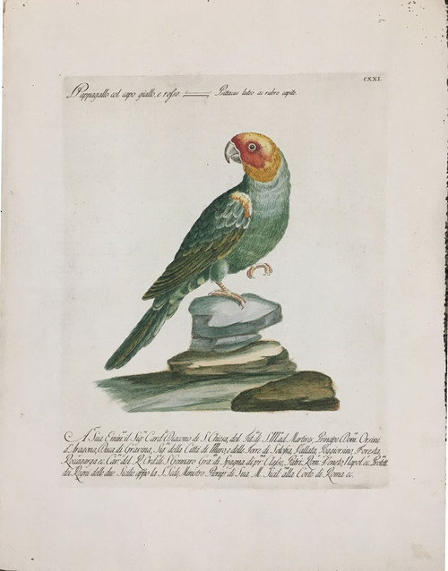 Parrot with Red & Yellow Head