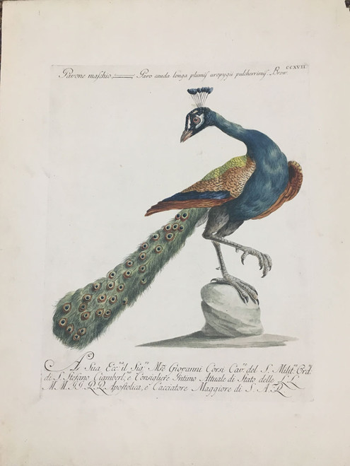 Peacock by Manetti