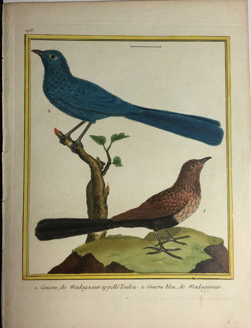 Cuckoos, Toulou & Blue
