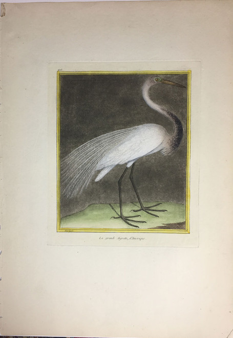Grand American Egret