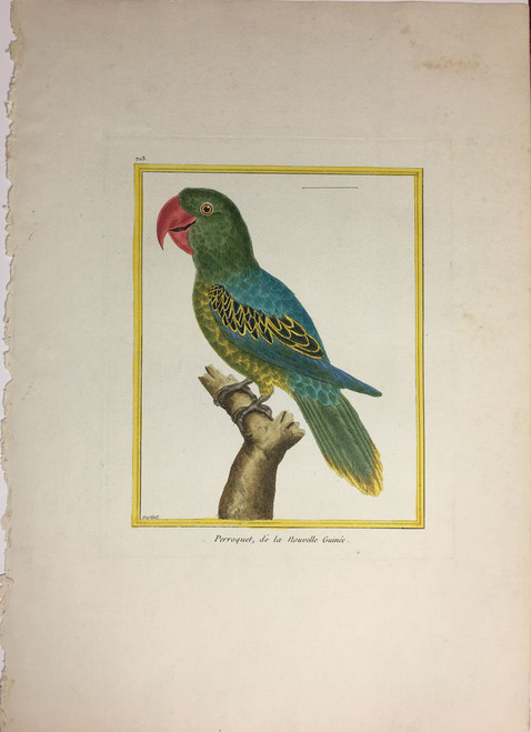 New Guinea Parakeet - Large Paper Royal Addition