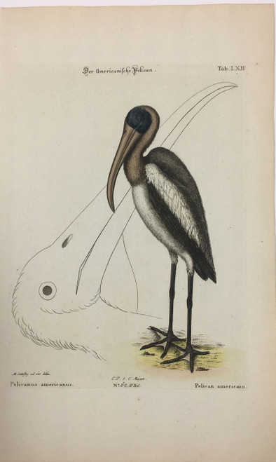 Wood Stork Head/Plate LXII
