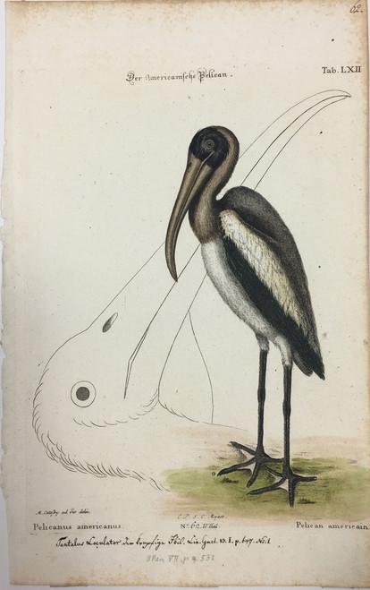 Wood Stork/Plate LXII