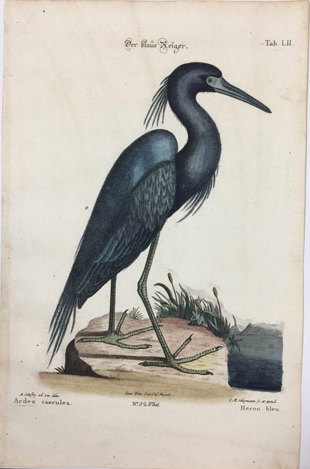 Black Heron/Plate LI