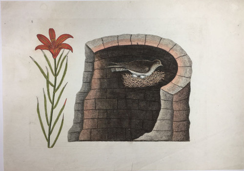 American Swallow with Wood Lily/Plate 8