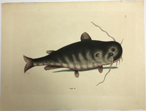 Catfish/Plate T-28