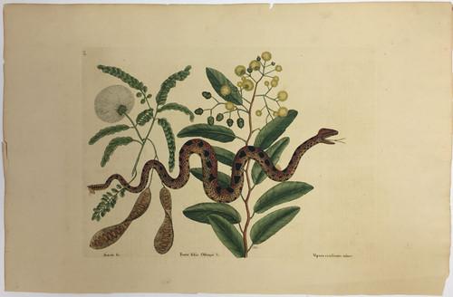 Small Rattlesnake/Plate 42