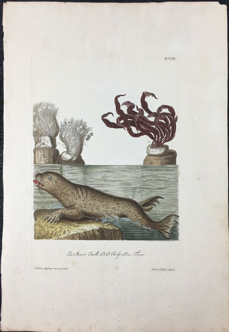 Otter, Plate H.VIII