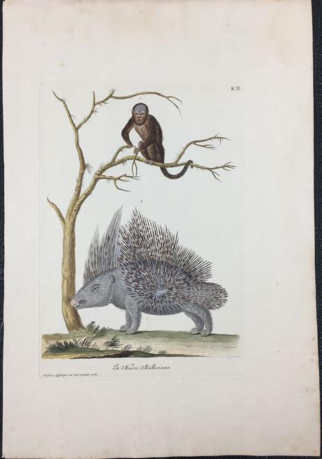 Porcupine & Monkey, Plate K.II