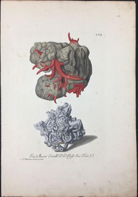 Corals, Plate A.VII
