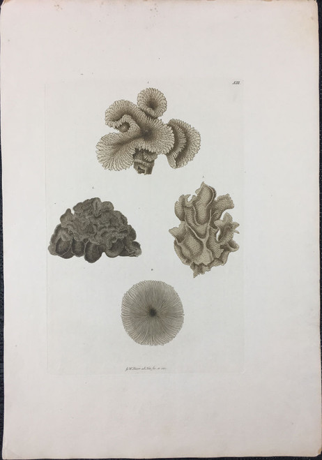 Corals, Plate A.III