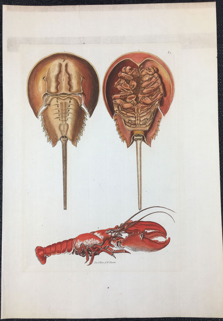Horseshoe Crab & Lobster, Plate F.I