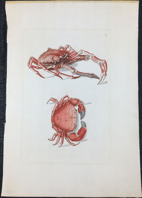 Crabs, Plate F