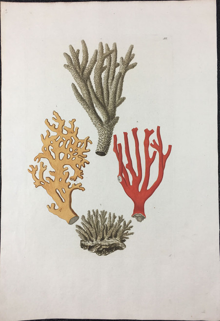 Corals Including Red Coral, Plate A.II