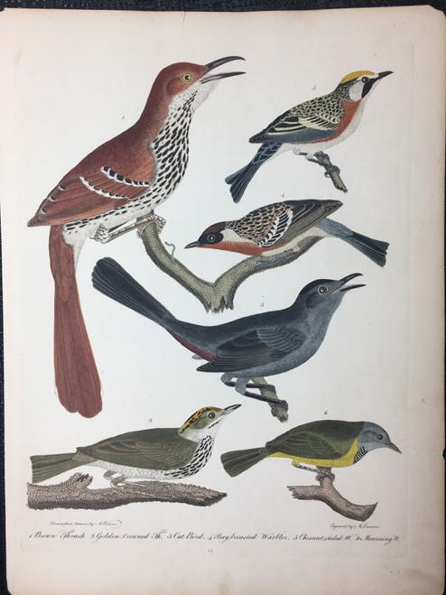 Plate 14: Brown Thrush, Cat Bird et al