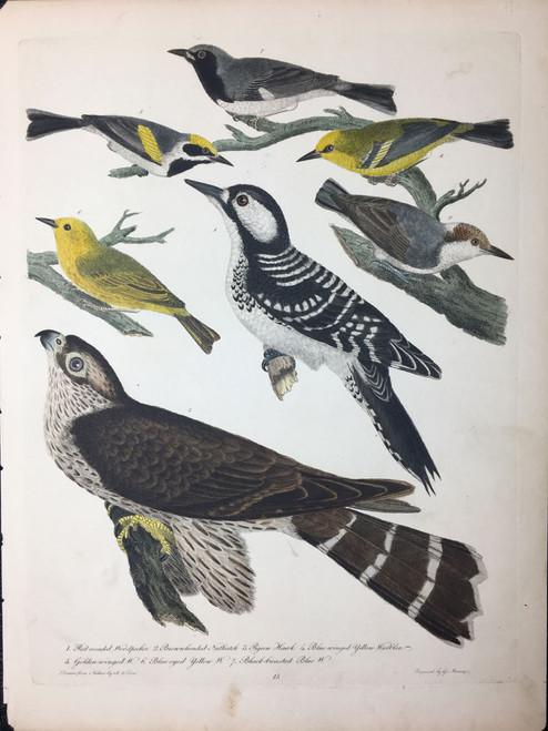 Plate 15: Red Cocaded Woodpecker, Pigeon Hawk et al