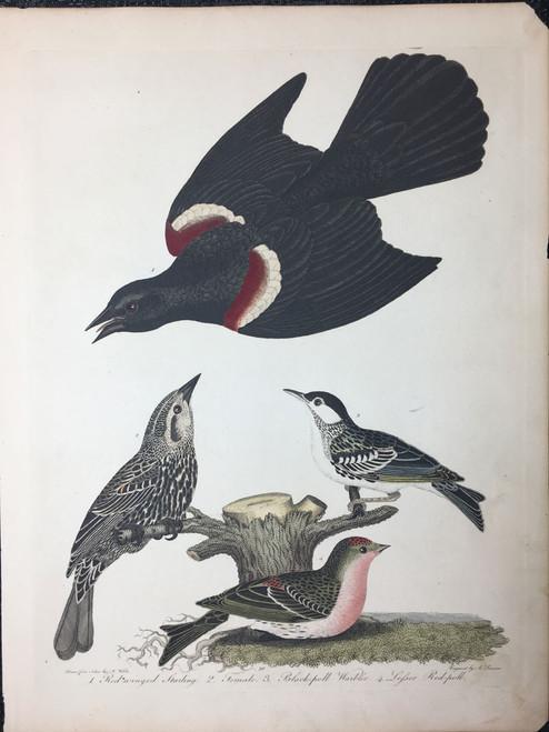 Plate 30: Red Wing Starling, Black-Poll Warbler et al