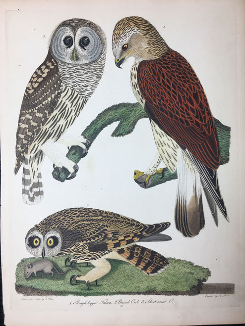 Plate 33: Rough Legged Falcon, Barred Owl et al