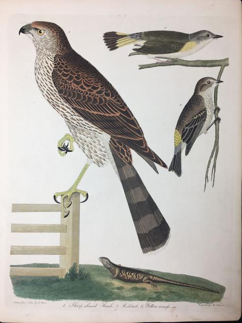 Plate 45: Sharp Skinned Hawk, Redstart et al