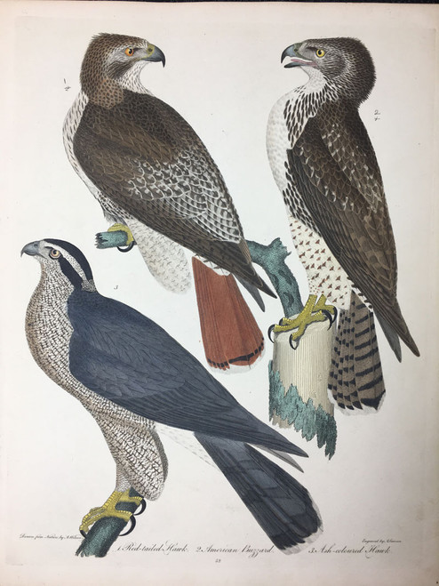 Plate 52: Red Tailed Hawk, American Buzzard et al
