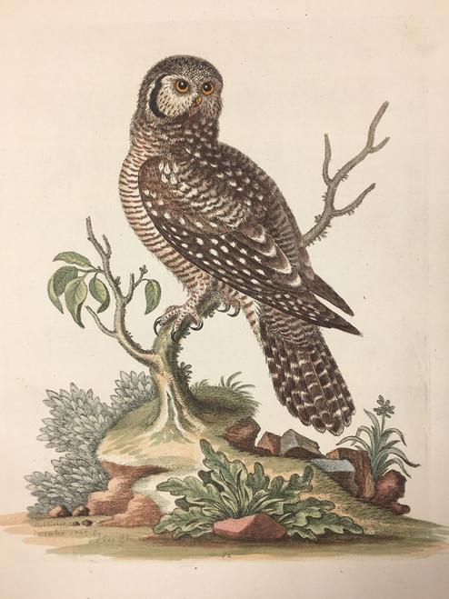 #82 Owl