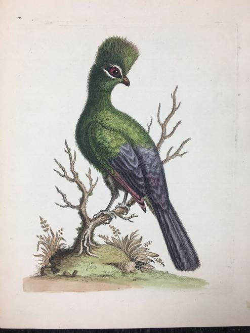 #7 Bird of Mexico
