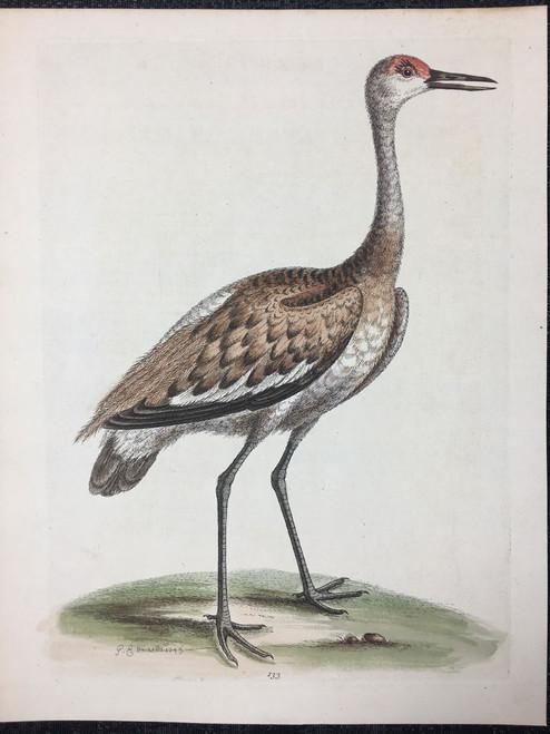 #133 Crane