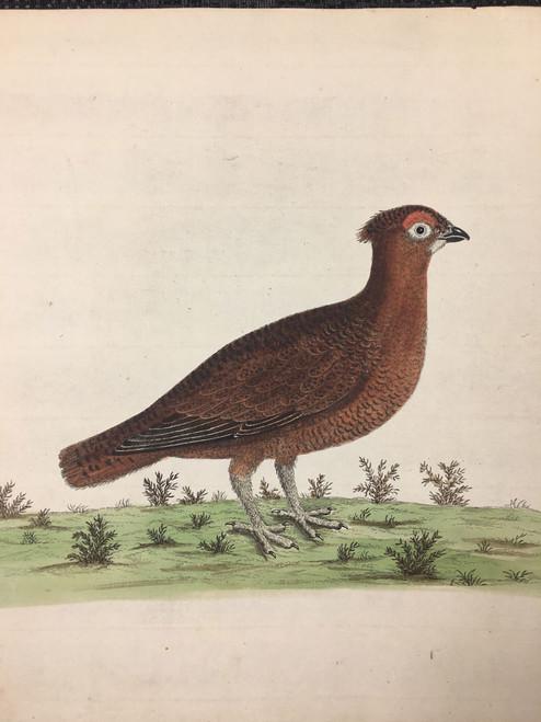 Partridge/Quail