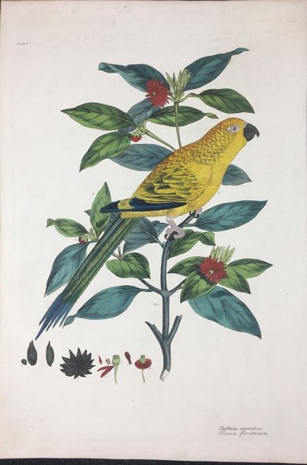 Psittacus aurantius, Illicium floridanum TAB. V (Yellow Breasted Lory, Florida Anise Tree)