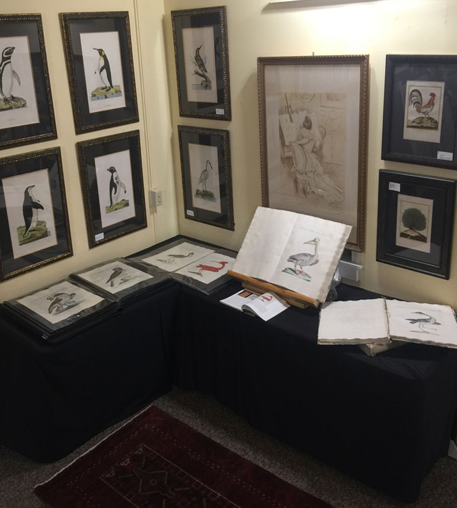Timmons Gallery - Bird Prints