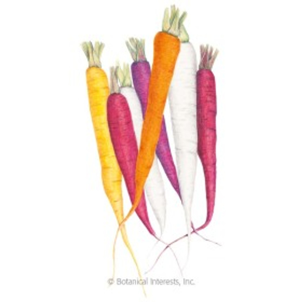 Carrot Carnival Blend Organic