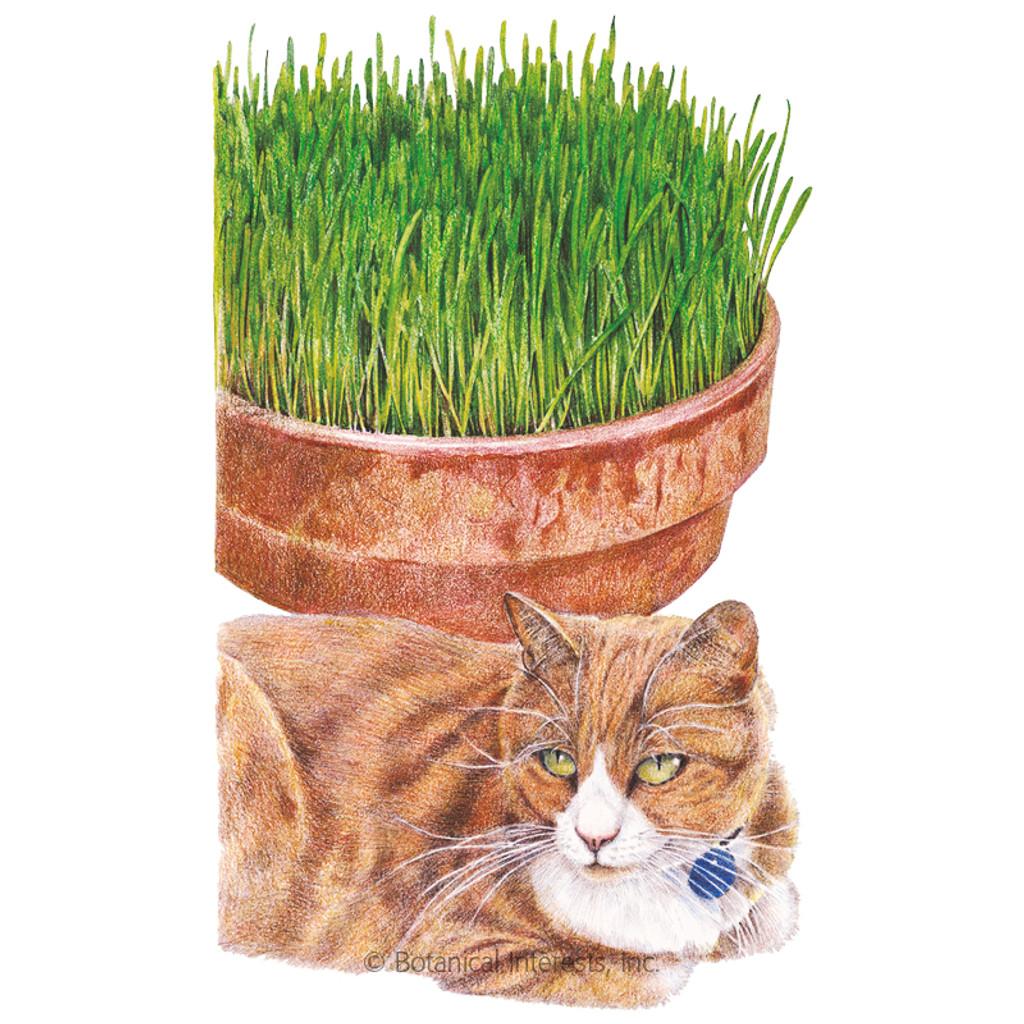 Cat Grass Mix Organic