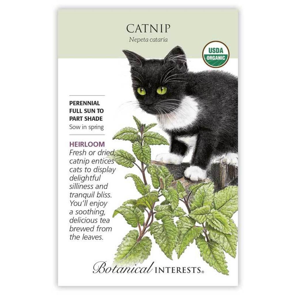 Catnip Organic